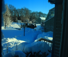A blizzard's tale 0022