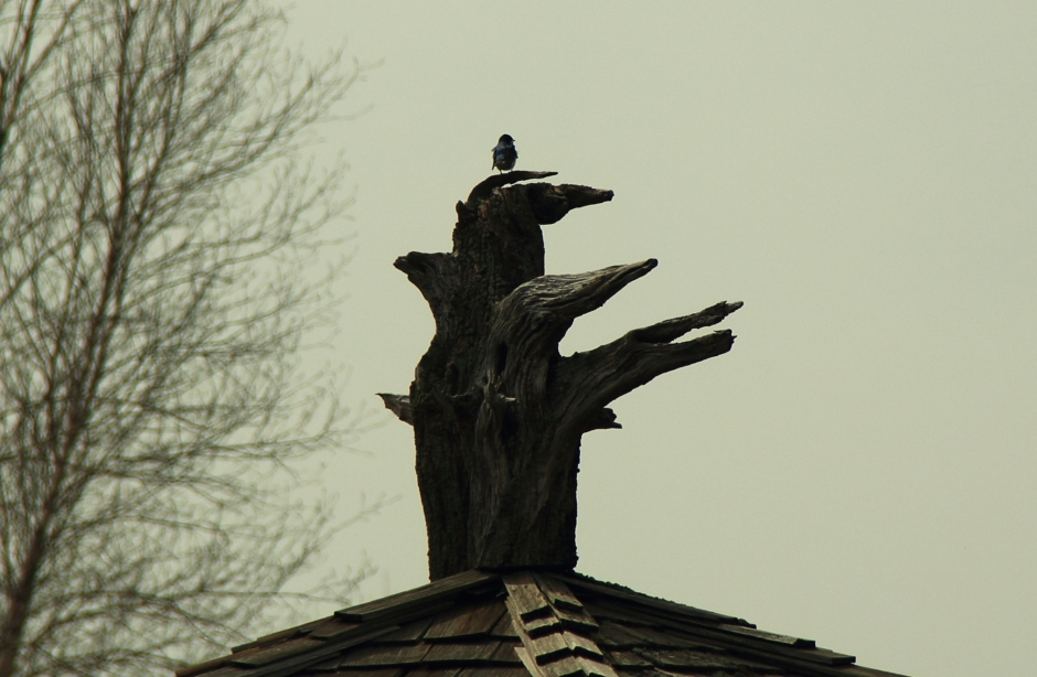 Bird time 0007